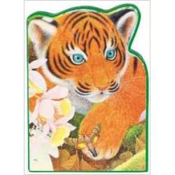 Tavi le tigre - L'Inde