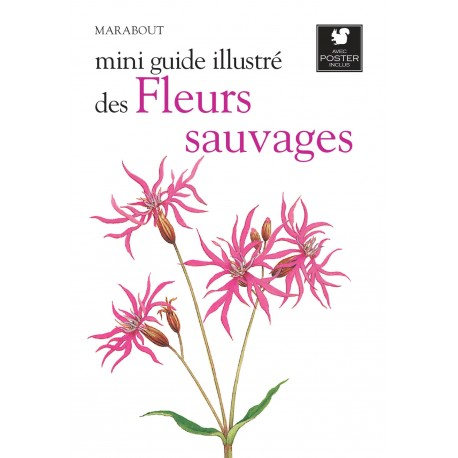 Mini guide illustré des fleurs sauvages