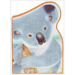 Polka le koala - L'Australie
